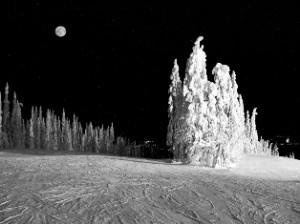 Бледная вышла Луна