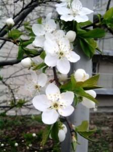 Весны рассвет