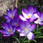 Весенний вальс цветов