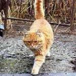 Ходит кошка по дорожке