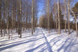 Мартовский-лес
