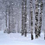 Снежная позёмка